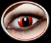 CAT EYES ROOD